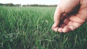Το ανθρώπινο χέρι κρατά πράσινο στενό σε επάνω χλόης απόθεμα βίντεο