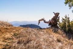Το απομονωμένο δέντρο Στοκ Εικόνα