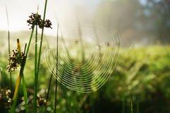 Το απόκρυφο αφηρημένο υπόβαθρο θερινής χλόης θαμπάδων ανοικτό πράσινο με τον ιστό αράχνης Ιστού αραχνών, δροσιά νερού μειώνεται Στοκ εικόνα με δικαίωμα ελεύθερης χρήσης