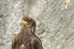 το αρπακτικό πτηνό εκτροφή&sig Στοκ φωτογραφία με δικαίωμα ελεύθερης χρήσης