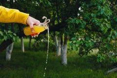 Το αρσενικό χέρι χύνει τη σπιτική λεμονάδα από ένα μπουκάλι σε ένα υπόβαθρο των δέντρων στη φύση υπαίθρια κινηματογράφηση σε πρώτ στοκ εικόνες