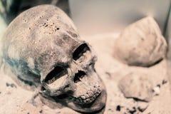 Το αρχαίο ανθρώπινο κρανίο βάζει στο έδαφος στοκ εικόνα με δικαίωμα ελεύθερης χρήσης