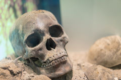 Το αρχαίο ανθρώπινο κρανίο βάζει στο έδαφος στοκ εικόνες