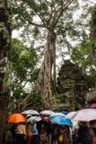 το αρχαίο angkor Καμπότζη prohm συγ&kap Στοκ Φωτογραφίες
