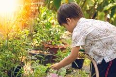 Το ασιατικό αγόρι ποτίζει εγκαταστάσεις στον κήπο του Στοκ Εικόνες