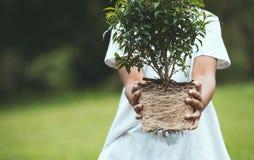 Το ασιατικό κορίτσι παιδιών που κρατά το νέο δέντρο για προετοιμάζει τη φύτευση Στοκ φωτογραφίες με δικαίωμα ελεύθερης χρήσης