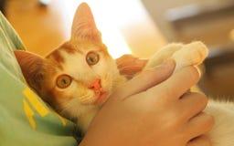 Το ασιατικό περιπλανώμενο γατάκι βάζει σε ετοιμότητα ανθρώπινο Στοκ φωτογραφίες με δικαίωμα ελεύθερης χρήσης