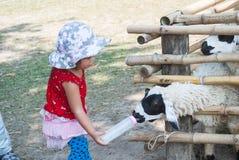 Το ασιατικό χαριτωμένο κοριτσάκι απολαμβάνει ένα πρόβατο Στοκ Φωτογραφία
