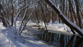 Το δασικό ρεύμα ρέει τοπίο στο χιόνι χειμερινής δασικό φύσης Στοκ Εικόνα