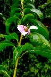 Το αστέρι του κήπου στοκ εικόνα με δικαίωμα ελεύθερης χρήσης
