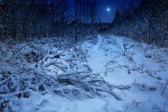 Το αστέρι Χριστουγέννων Στοκ Εικόνα