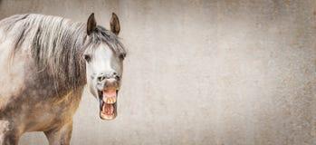 Το αστείο πρόσωπο αλόγων με ανοικτό η εξέταση κεκλεισμένων των θυρών το γκρίζο υπόβαθρο, θέση για το κείμενο στοκ εικόνες