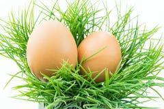 Το αυγό κοτών στη φρέσκια χλόη με το απομονωμένο υπόβαθρο Στοκ Φωτογραφία