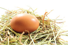 Το αυγό στη φωλιά κοτόπουλου Στοκ εικόνα με δικαίωμα ελεύθερης χρήσης