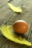 το αυγό χαρτονιών επενδύει με φτερά παλαιό Στοκ Εικόνες