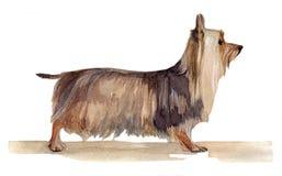 Το αυστραλιανό μεταξωτό τεριέ χρωμάτισε στο watercolor στο σχεδιάγραμμα στοκ φωτογραφία με δικαίωμα ελεύθερης χρήσης
