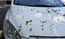 Το αυτοκίνητο καλύπτεται με τα άκρα πουλιών ` s στοκ εικόνες