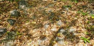 Το αφηρημένο υπόβαθρο, ξεραίνει τα φύλλα στο έδαφος στο δάσος Στοκ Φωτογραφία