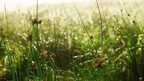 Το αφηρημένο υπόβαθρο χλόης θερινής αυγής θαμπάδων ανοικτό πράσινο με τον ιστό αράχνης Ιστού αραχνών, δροσιά νερού μειώνεται Κλεί Στοκ φωτογραφία με δικαίωμα ελεύθερης χρήσης