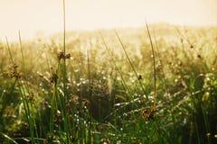 Το αφηρημένο υπόβαθρο χλόης θερινού ηλιοβασιλέματος θαμπάδων ανοικτό πράσινο με τον ιστό αράχνης Ιστού αραχνών, δροσιά νερού μειώ Στοκ Φωτογραφίες