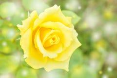 Το αφηρημένο φίλτρο υποβάθρου και χρώματος κίτρινου αυξήθηκε στοκ φωτογραφίες