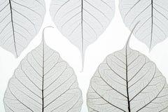 το αφηρημένο φθινόπωρο αφήν&ep Στοκ Εικόνες