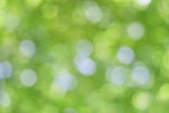 Το αφηρημένο φυσικό υπόβαθρο θαμπάδων, τα πράσινα φύλλα Στοκ Εικόνα