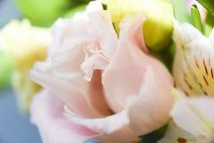 Το αφηρημένο floral ροζ υποβάθρου αυξήθηκε μέρος των πετάλων Στοκ φωτογραφίες με δικαίωμα ελεύθερης χρήσης
