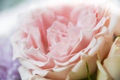 Το αφηρημένο floral ροζ υποβάθρου αυξήθηκε μέρος των πετάλων Στοκ εικόνα με δικαίωμα ελεύθερης χρήσης