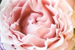 Το αφηρημένο floral ροζ υποβάθρου αυξήθηκε μέρος των πετάλων Στοκ φωτογραφία με δικαίωμα ελεύθερης χρήσης