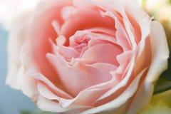 Το αφηρημένο floral ροζ υποβάθρου αυξήθηκε μέρος των πετάλων Στοκ Φωτογραφίες