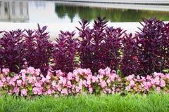 Το Α λεπτά ο κήπος παρουσιάζει χρώματά του Στοκ φωτογραφίες με δικαίωμα ελεύθερης χρήσης