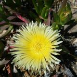 Το Α το λουλούδι Στοκ εικόνα με δικαίωμα ελεύθερης χρήσης