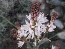 Το Α το άσπρο και πορφυρό λουλούδι την άνοιξη στοκ εικόνες