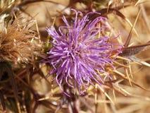 Το Α το πορφυρό λουλούδι στοκ εικόνες με δικαίωμα ελεύθερης χρήσης
