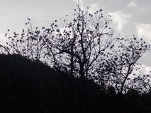 Το Α το λυπημένο δέντρο στοκ φωτογραφία με δικαίωμα ελεύθερης χρήσης