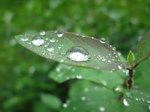 το βάθος ρίχνει τη βροχή φύλλων πεδίων απότομα Στοκ φωτογραφίες με δικαίωμα ελεύθερης χρήσης