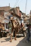 Το βαγόνι εμπορευμάτων που τραβιέται από μια καμήλα Ινδία Στοκ φωτογραφία με δικαίωμα ελεύθερης χρήσης