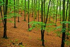 Το βαθύ δάσος την άνοιξη με φρέσκο πράσινο βγάζει φύλλα Στοκ φωτογραφία με δικαίωμα ελεύθερης χρήσης