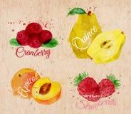 Το βακκίνιο watercolor φρούτων, κυδώνι, βερίκοκο, άγριο Στοκ Εικόνες