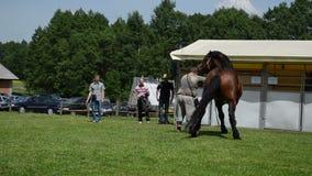 Το βαρύ άλογο παρουσιάζει άτομο απόθεμα βίντεο