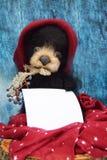 Το βελούδο teddy αντέχει με ένα φύλλο να γράψει το κείμενο σε ένα θερμό burgundy καπέλο μεταξύ των φύλλων φθινοπώρου σε ένα μπλε  Στοκ φωτογραφίες με δικαίωμα ελεύθερης χρήσης