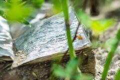Το βιβλίο στην άμμο Στοκ φωτογραφία με δικαίωμα ελεύθερης χρήσης