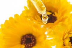 Το βοτανικό απόσπασμα από marigold τα officinalis Calendula λουλουδιών Στοκ εικόνες με δικαίωμα ελεύθερης χρήσης