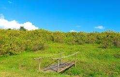 Το βουνό είναι πλήρες marigold δέντρων Σε έναν φωτεινό ουρανό στοκ εικόνες