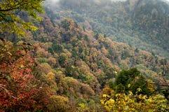 Το βουνό με το φθινόπωρο πτώσης χρωματίζει τα δέντρα - χρυσός, πορτοκάλι, κόκκινο και γ στοκ εικόνα