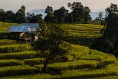 Το βουνό οξύνει το τοπίο, Pah Pong Piang στο chiangmai maejam, ορυζώνας Στοκ Εικόνες