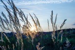 Το βράδυ, ηλιοβασίλεμα καλάμων Στοκ φωτογραφία με δικαίωμα ελεύθερης χρήσης