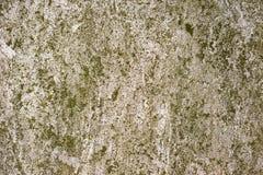 Το βρύο κάλυψε τον επικονιασμένο τοίχο Στοκ Φωτογραφία