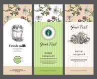 Το γάλα μπορούν και τα λουλούδια λιβαδιών E Templats για τη συσκευασία, ιπτάμενα, εμβλήματα Κατάλληλος για το σχέδιο διανυσματική απεικόνιση